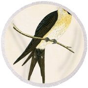 Rufous Swallow Round Beach Towel by English School