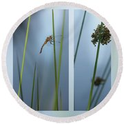 Rushes And Dragonfly Round Beach Towel