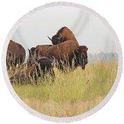 Rut Season For Buffalo 0077 Round Beach Towel