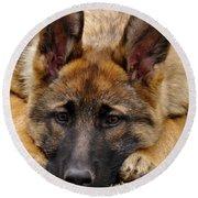 Sable German Shepherd Puppy Round Beach Towel
