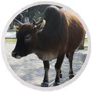 Round Beach Towel featuring the photograph Sacred Cow 2 by Randall Weidner
