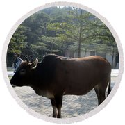 Round Beach Towel featuring the photograph Sacred Cow 3 by Randall Weidner