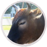 Round Beach Towel featuring the photograph Sacred Cow 4 by Randall Weidner