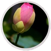 Sacred Lotus Bud 3 Round Beach Towel