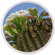 Saguaro Blooms Round Beach Towel
