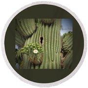 Saguaro In Bloom Round Beach Towel