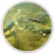 Round Beach Towel featuring the photograph Salmon And Sturgeon by Katie Wing Vigil