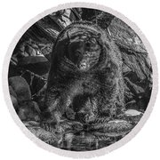 Salmon Seeker Black Bear  Round Beach Towel