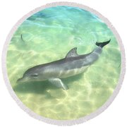 Round Beach Towel featuring the photograph Samu 1 , Monkey Mia, Shark Bay by Dave Catley
