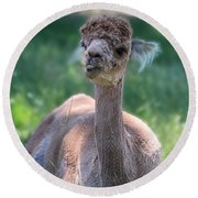 San Juan Alpaca Shear Heaven Round Beach Towel