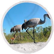 Sandhill Crane By Camera Phone 000 Round Beach Towel