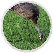 Round Beach Towel featuring the photograph Sandhill Crane II by Richard Rizzo