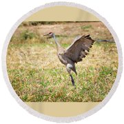 Round Beach Towel featuring the photograph Sandhill Crane Morning Stretch by Ricky L Jones