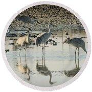 Sandhill Crane Reflections Round Beach Towel