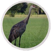 Round Beach Towel featuring the photograph Sandhill Crane by Richard Rizzo