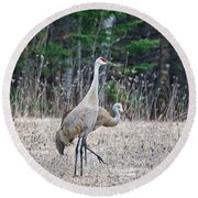 Round Beach Towel featuring the photograph Sandhill Cranes 1166 by Michael Peychich