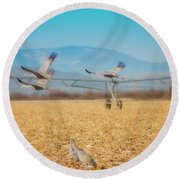 Sandhill Cranes In Flight Round Beach Towel