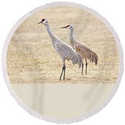Round Beach Towel featuring the photograph Sandhill Cranes Of Montana by Jennie Marie Schell
