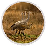 Round Beach Towel featuring the photograph Sandhill Cranes Texas Fence-line by Robert Frederick