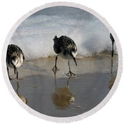 Sandpipers Feeding Round Beach Towel