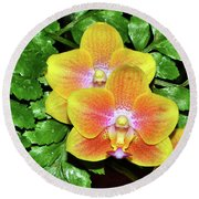 Sara Gold Orchids 003 Round Beach Towel