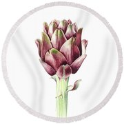 Sardinian Artichoke Round Beach Towel by Alison Cooper