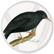 Sardinian Starling Round Beach Towel