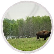 Saskatchewan Buffalo Round Beach Towel by Ryan Crouse
