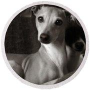 Say What Italian Greyhound Round Beach Towel