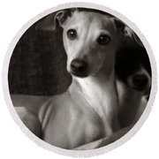 Say What Italian Greyhound Round Beach Towel