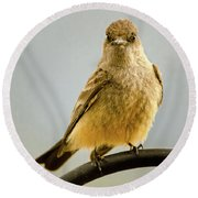 Say's Phoebe Ranch Bird Round Beach Towel