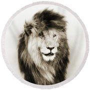 Scar Lion Closeup Square Sepia Round Beach Towel