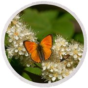 Round Beach Towel featuring the photograph Scarce Copper 2 by Jouko Lehto
