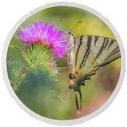 Scarce Swallowtail - Iphiclides Podalirius Round Beach Towel