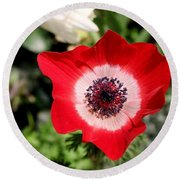 Scarlet Anemone Round Beach Towel by Living Color Photography Lorraine Lynch