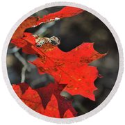 Scarlet Autumn Round Beach Towel