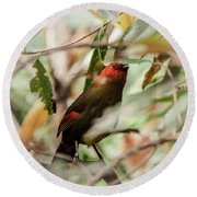 Scarlet-faced Liocichla Round Beach Towel