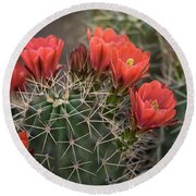 Round Beach Towel featuring the photograph Scarlet Hedgehog Cactus  by Saija Lehtonen