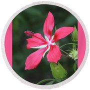Scarlet Hibiscus #4 Round Beach Towel