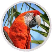 Round Beach Towel featuring the photograph Scarlet Macaw by Steven Sparks