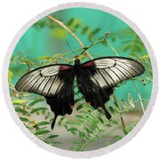 Round Beach Towel featuring the photograph Scarlet Swallowtail Butterfly -2 by Paul Gulliver