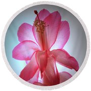 Round Beach Towel featuring the photograph Schlumbergera Portrait. by Terence Davis