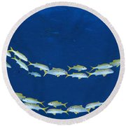 Round Beach Towel featuring the photograph School Of Fish Great Barrier Reef by Panoramic Images