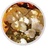 Round Beach Towel featuring the photograph Schrooms And Shadows by Randy Rosenberger