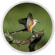 Scissor-tailed Flycatcher Round Beach Towel