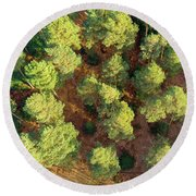 Scots Pines Round Beach Towel