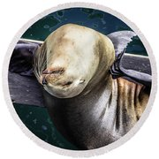 California Sea Lion - Scratch The Itch Round Beach Towel