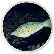 Round Beach Towel featuring the photograph Scrawled Filefish by Jean Noren