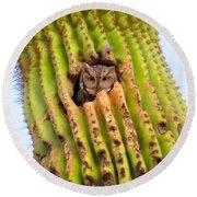 Screech Owl In Saguaro Round Beach Towel