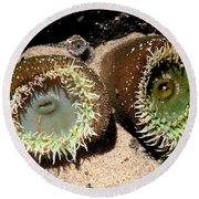 Sea Anemones Round Beach Towel